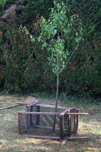 petit arbre protégé chaises