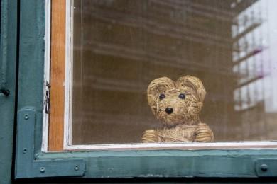 ourson à la fenêtre